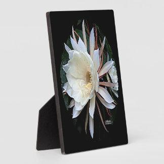 Epiphyte Cactus Flower Plaque