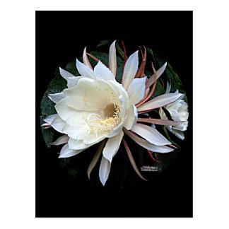Epiphyte Cactus Flower Postcard