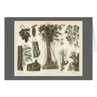 Epiphyten Card