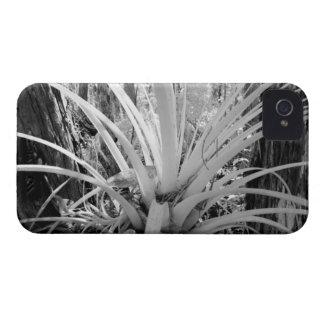 Epiphytic tillandsia are common in the Florida, iPhone 4 Covers