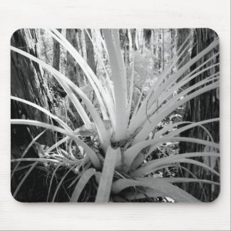 Epiphytic tillandsia are common in the Florida, Mouse Pad