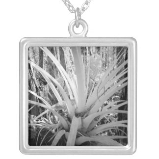 Epiphytic tillandsia are common in the Florida, Silver Plated Necklace