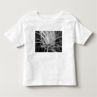Epiphytic tillandsia are common in the Florida, T Shirts