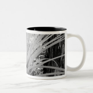 Epiphytic tillandsia are common in the Florida, Two-Tone Coffee Mug