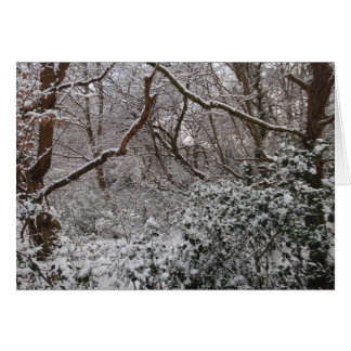 Epping Forest In Winter Cards