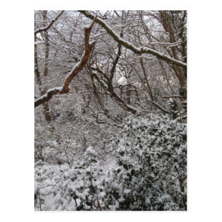Epping Forest In Winter Postcard