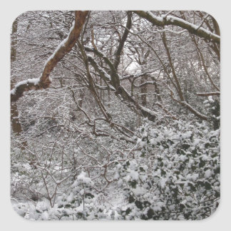 Epping Forest In Winter Square Sticker