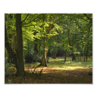 Epping Forest Photo Print