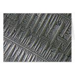 Epsomite debajo del microscopio tarjeta