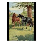 Equestrian del semental de la yegua del caballo de tarjeta postal