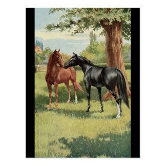 Equestrian del semental de la yegua del caballo tarjeta postal
