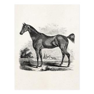 Equestrian excelente del caballo del vintage perso