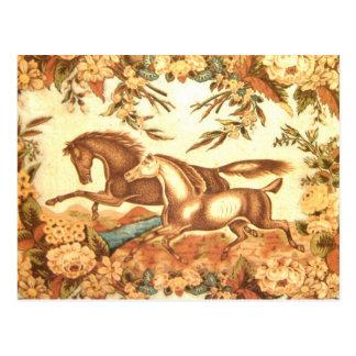 Equestrian Horse Postcard 1