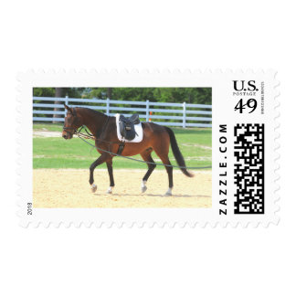 Equestrian Horse Training With An Empty Saddle Postage