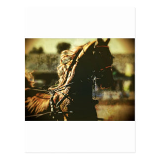 Equestrian | Pure Power Postcard