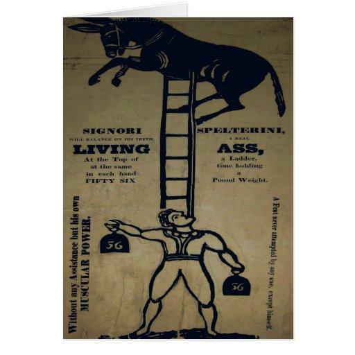 Equilibrio de una tarjeta viva del ~ del burro