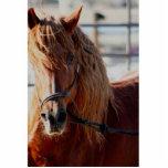Equine Alliance Photo Sculpture