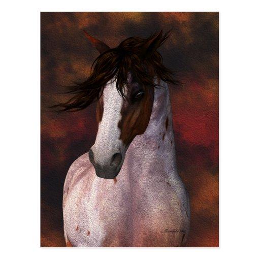 Equine Art,  Horse Postcard
