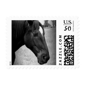 Equine Beauty Postage