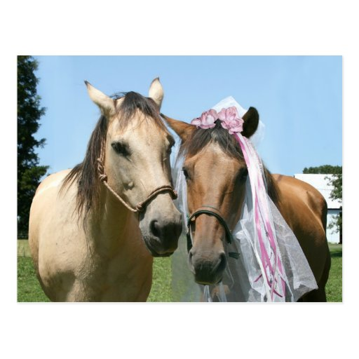 Equine bride and groom postcard