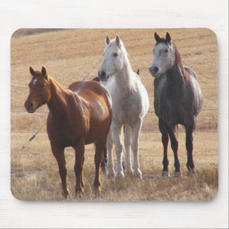 Equine Curiosity 3 Mouse Pad