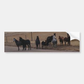 Equine Curiosity Herd Car Bumper Sticker