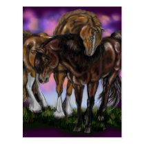 Equine Devotion~valentine postcard