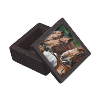 Equine Horse Show Premium Gift Box