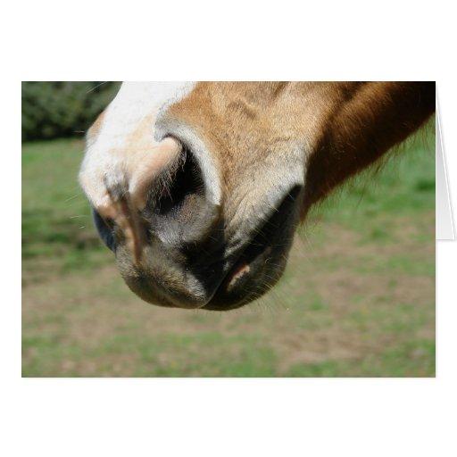 Equine Nose Cards