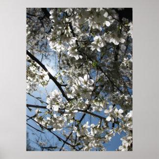 Equinoccio de la flor de cerezo, impresión