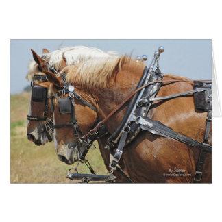 Equipo belga del caballo de proyecto tarjetón