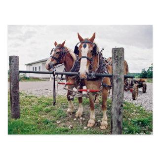 Equipo de Amish en el poste que engancha Postales