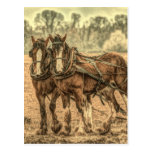 equipo de caballos de proyecto hermosos postales