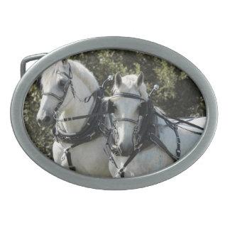 Equipo de Percheron Hebillas De Cinturon Ovales