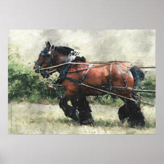 Equipo del caballo de proyecto en arnés poster