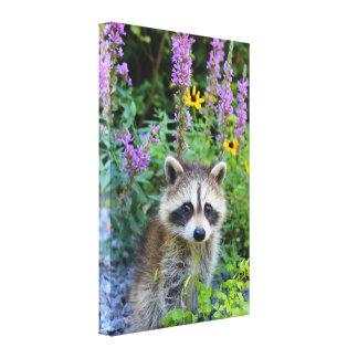 Equipo del mapache entre la impresión de la lona impresiones en lona estiradas