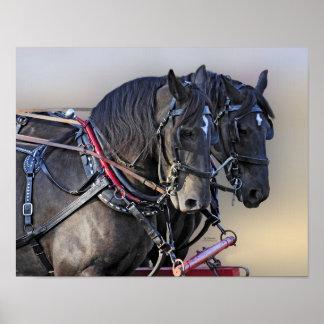 Equipo del trabajo del caballo de proyecto de Perc Poster