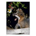 Equipo Fox-joven gris Felicitación