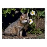 Equipo Fox-joven gris Tarjeton