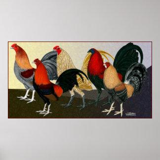 Equipo ideal del gallo poster