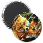 Equipos del Fox rojo Imanes De Nevera
