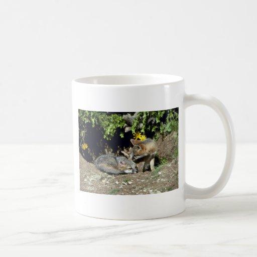 Equipos Zorro-jovenes grises en la boca de la guar Tazas De Café