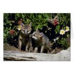 Equipos Zorro-jovenes grises en la guarida Felicitación