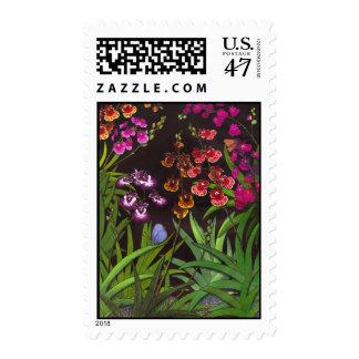 Equitant Oncidium Tolumnia Orchid Postage