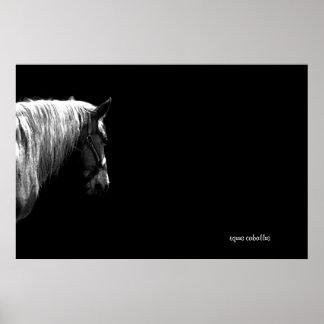 Equus Caballus Poster