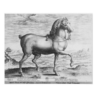 Equus Germanus Posters