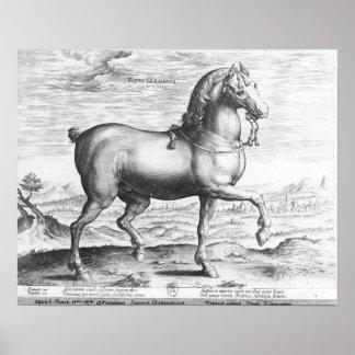 Equus Germanus Poster