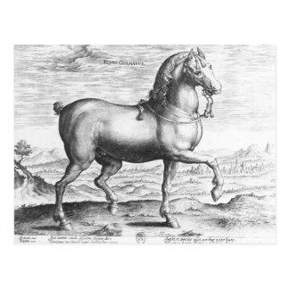 Equus Germanus Tarjetas Postales