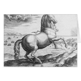 Equus Hispanus Greeting Cards