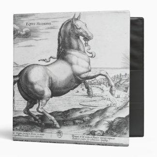Equus Hispanus